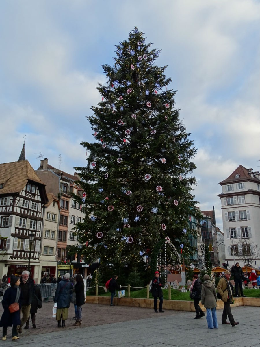 Christmas Tree Strasbourg